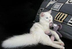 gato branco.jpg