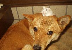 rato e raposa.jpg