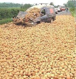 potato-attack.jpg